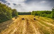 Davanje u zakup i na korišćenje poljoprivrednog zemljišta